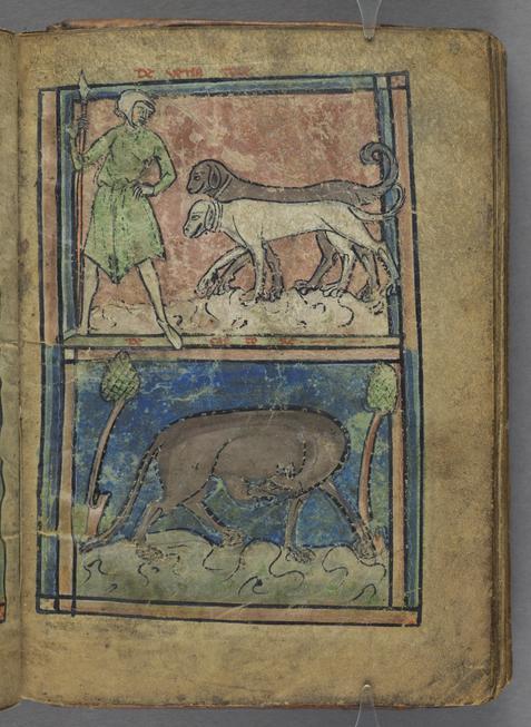 Fox; Ostrich; Hunter; Beaver