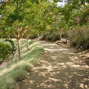 Leafy Shadows: Bowl Garden Perimeter
